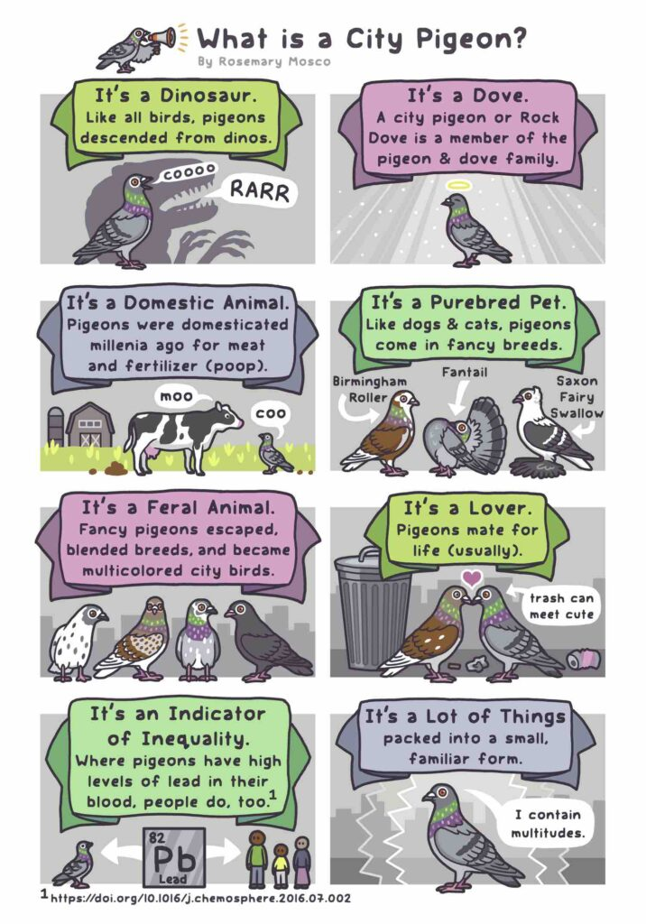 A city pigeon is a dove, a pet, a lover, and a dinosaur. Art by Rosemary Mosco, author of A Pocket Guide to Pigeon Watching (September 2021).